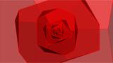 四角い薔薇